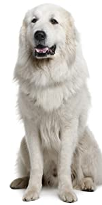 dog hair dryer pet blower grooming blaster