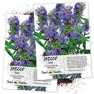 blue hyssop herb seeds for planting