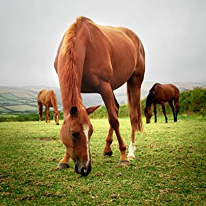 Horse Eating Majesty's Bio+ Wafers