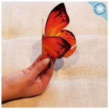 Window flakes window cling butterfly set of 8 double sided reusable anti-collision bird safety