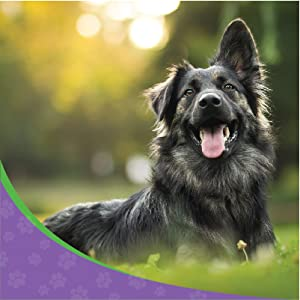 dog glucosamine dogs supplement painful hip and joints natural and tasty treats made in uk