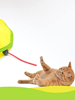 cat meow toy