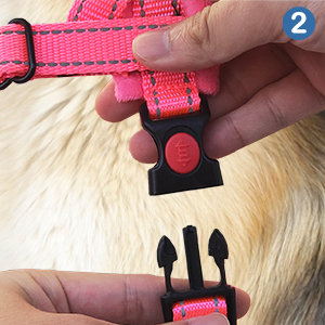 Walking Dog Harness and Lead Set