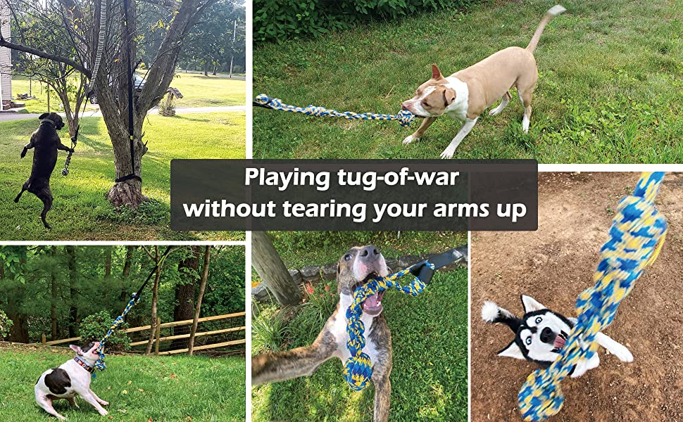 playing tug of war with dogs