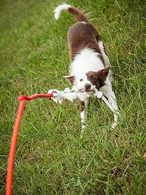 dog tugging on dog toy