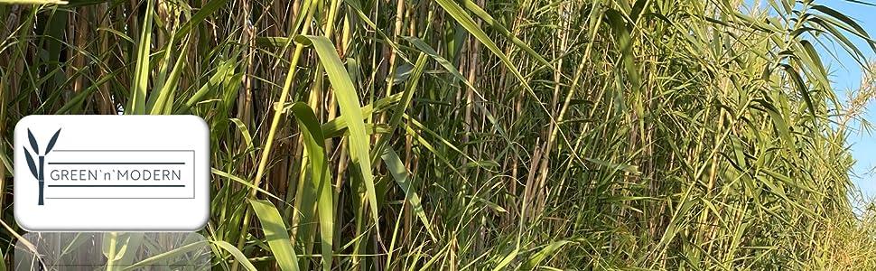 bambou.