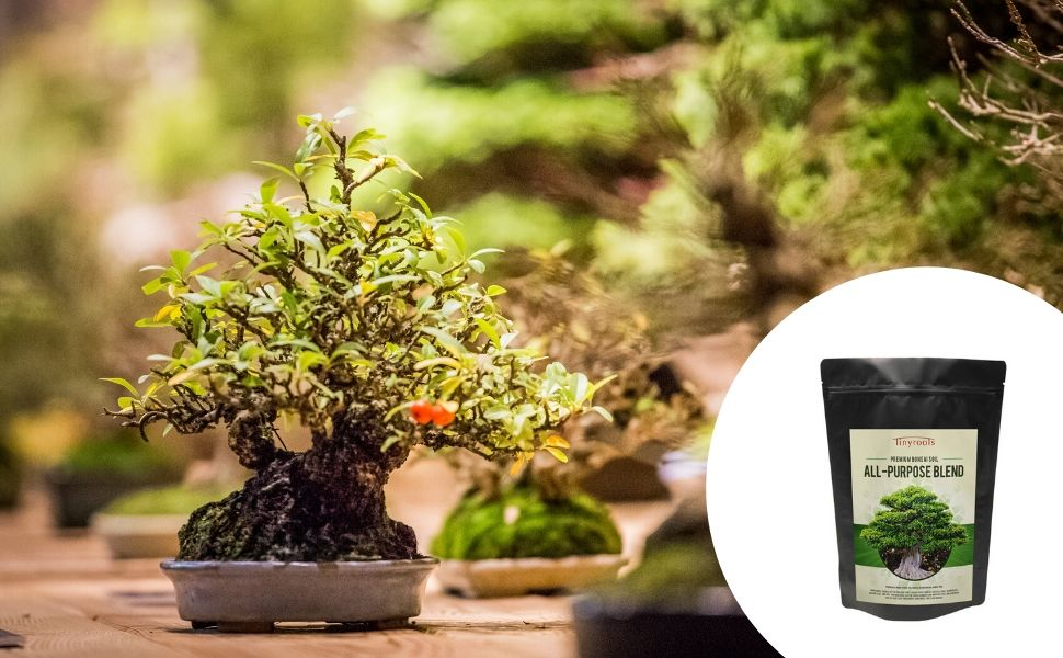 Amazon Com Tinyroots Bonsai Soil Premium Blend All Purpose Pre Mixed Potting Soil Used For All Varieties Of Bonsai Trees 2 Quarts Soil And Soil Amendments Garden Outdoor