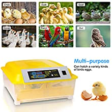 Egg Incubators Gift for Kids, 12 Eggs Fully Automatic Digital Poultry Hatcher Machine Breeder