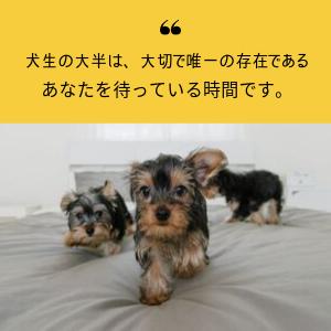 犬生を豊かに