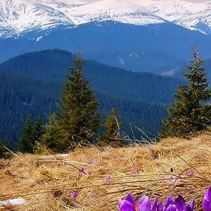 saffron premium superior herbs supplement full whole ground stigmas capsules extract safron spanish
