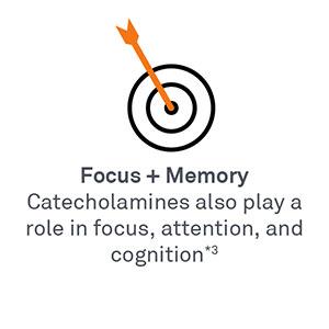 Focus + Memory