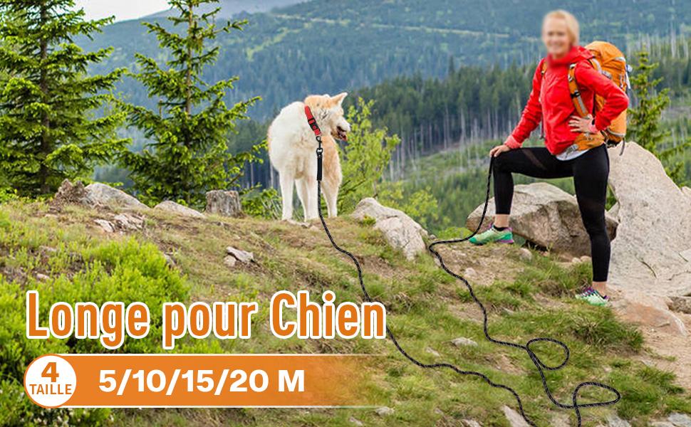 Longe pour Chien