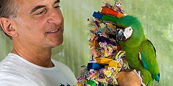 Pájaros Loro Cacatuas Loro Cocatiels periquitos canarios pinches Budgies gris africano amazon