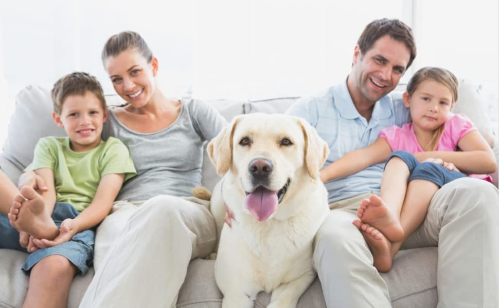 Combinaison de récupération pour chien