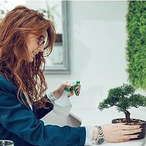 office bonsai