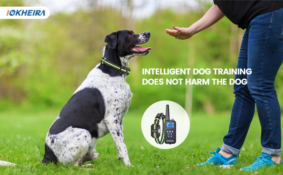 dog training collar 1