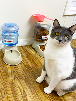 cat feeder and water dispenser