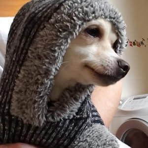 dogs  dog sweater christmas  girl dog sweater  christmas sweater dog  dog sweaters for chihuahuas