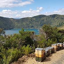 mountain valley raw manuka honey new zealand wild native nature pure natural honeys variety gift box