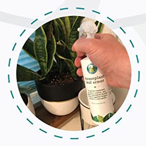 clean plant leaves, clean and protect plant leaves, shine leaf, shine leaves
