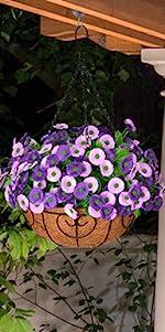 Purple mums with basket