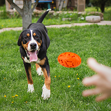 dog tough toys for tough chewers