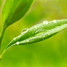 tea tree acne wash