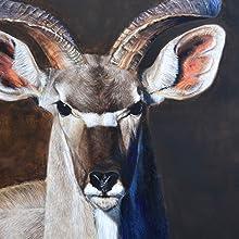 greater kudu close up