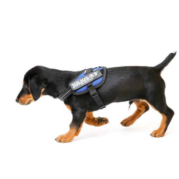 Trixie - Arnés Julius-K9 Dog IDC para perros (L-XL/Amarillo Neón ...