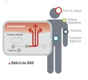 ¿Cómo actúa DAOfood?