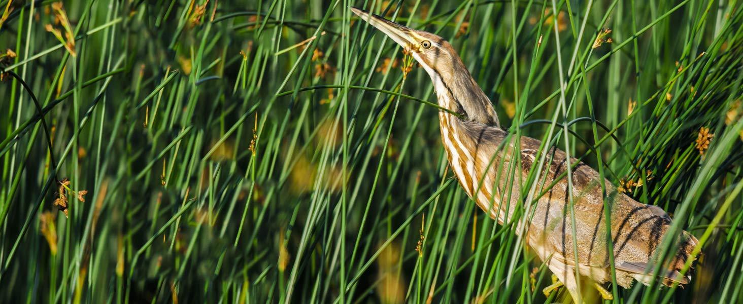 Great Mid-size Birding Binocular
