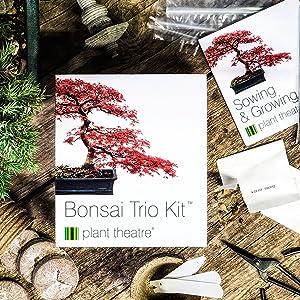 Bonsai Trio Kit per la coltivazione di 4 bonsai