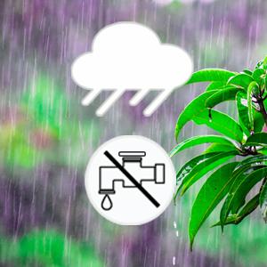 rain skip