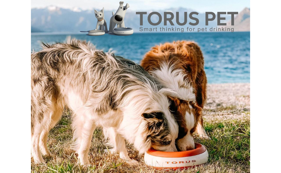 Torus Pet water bowl refill filter