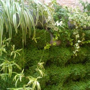 Jardín Vertical: Amazon.es: Jardín