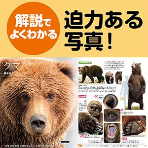 doubutsu_2.jpg
