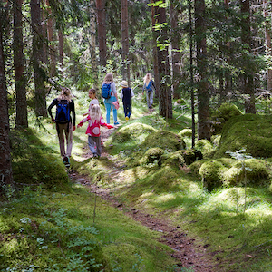 Family walking through a forest, with sunlight streaming through the branches.