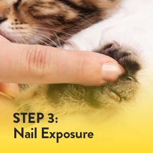 expose the cat's claw by gently pressing with your thumb on top and your index finger underneath