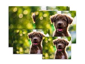 Prime Photos Photo Prints Large Luster Paper Type Prints Print Images