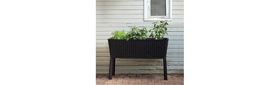 Keter - Mini huerto en casa Easy Grow con depósito de agua, Color ...