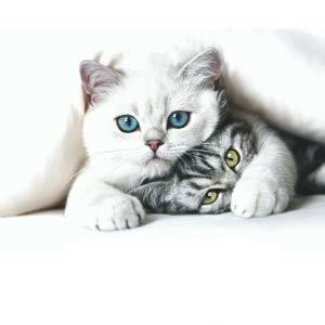 Lechos absorbentes (no aglomerantes), cómo preparar el arenero de tu gato, arenero (de 30 x 40 cm)