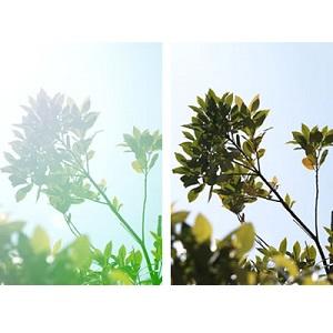SIGMA 単焦点広角レンズ Art 19mm F2.8 DN