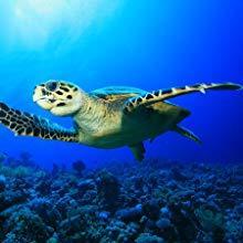 oceaan; clan; recycle; aarde; beschermen