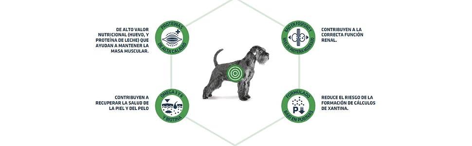 ADVANCE Veterinary Diets Leishmaniasis - Pienso Para Perros ...