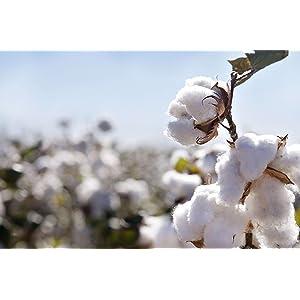 100% Cotton Bedsheet
