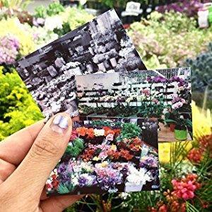 showing 2x3 pictures in garden