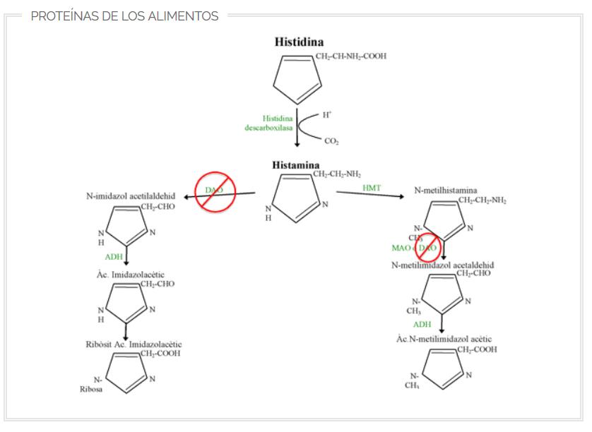 Migrasin sin cafeína 60 comprimidos - Alimento para el tratamiento dietético de la Migraña causada por el Déficit de DAO