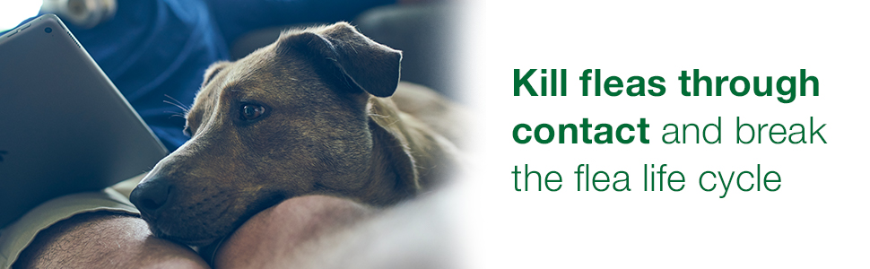 El tratamiento de pulgas Advantage II para perros funciona a través del contacto para romper el ciclo de vida de las pulgas.