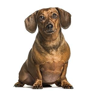 Cibo secco per cani adulti sovrappeso o sterilizzati, formula leggera, per tutte le razze