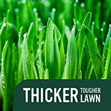 Thicker Tougher Lawn